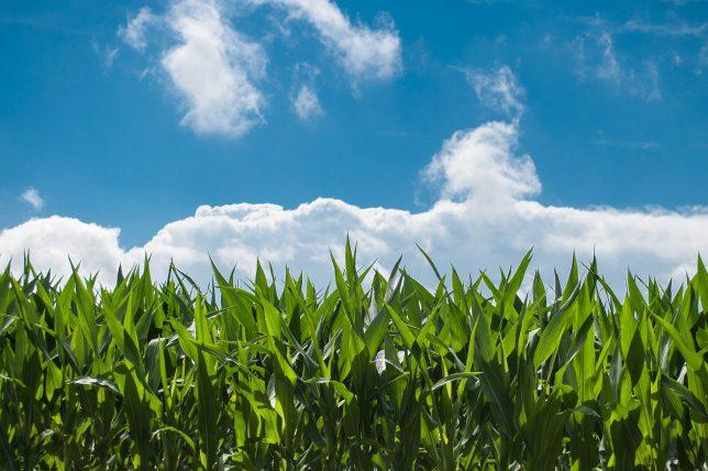 農地転用と開発行為
